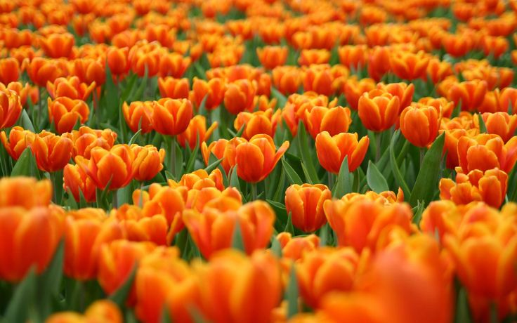 Spring has sprung when it comes to the mortgage market